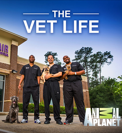 The Vet Life Season 2 Release Date