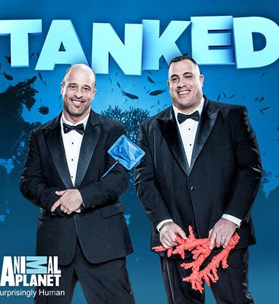 Tanked Season 8 Release Date