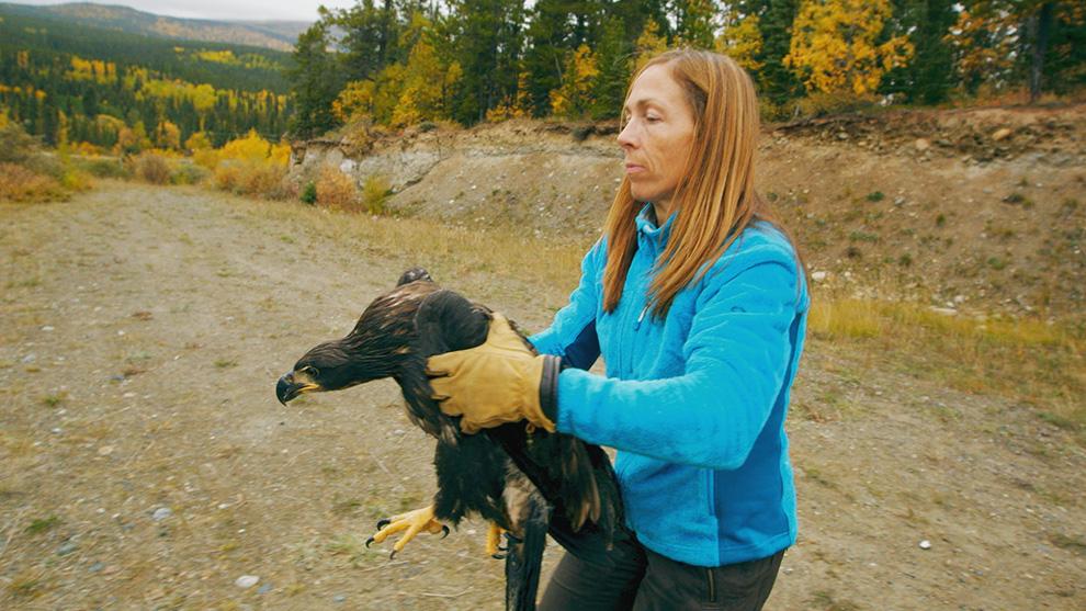Oakley, Yukon Vet Season 5 2